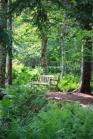 The Wild Gardens Of Acadia Friends Of Acadia