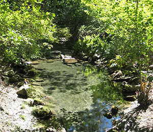 In 2010, the pool was choked with overgrown and invasive plants, and the stones ringing the pool had slipped out of place.
