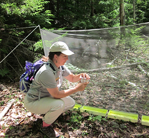 DeLene collects beetles at the 2014 Acadia National Park Bioblitz.