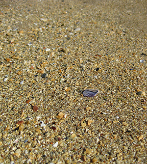 The sand of Sand Beach is made up of tiny pieces of shells, urchins, green mussels, and crab shell in addition to grains of sand.