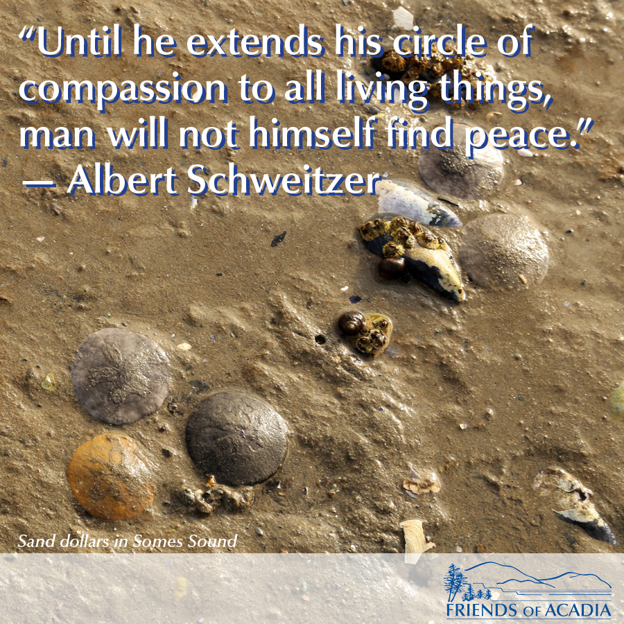 Until he extends his circle of compassion to all living things, man will not himself find peace. - Albert Schweitzer