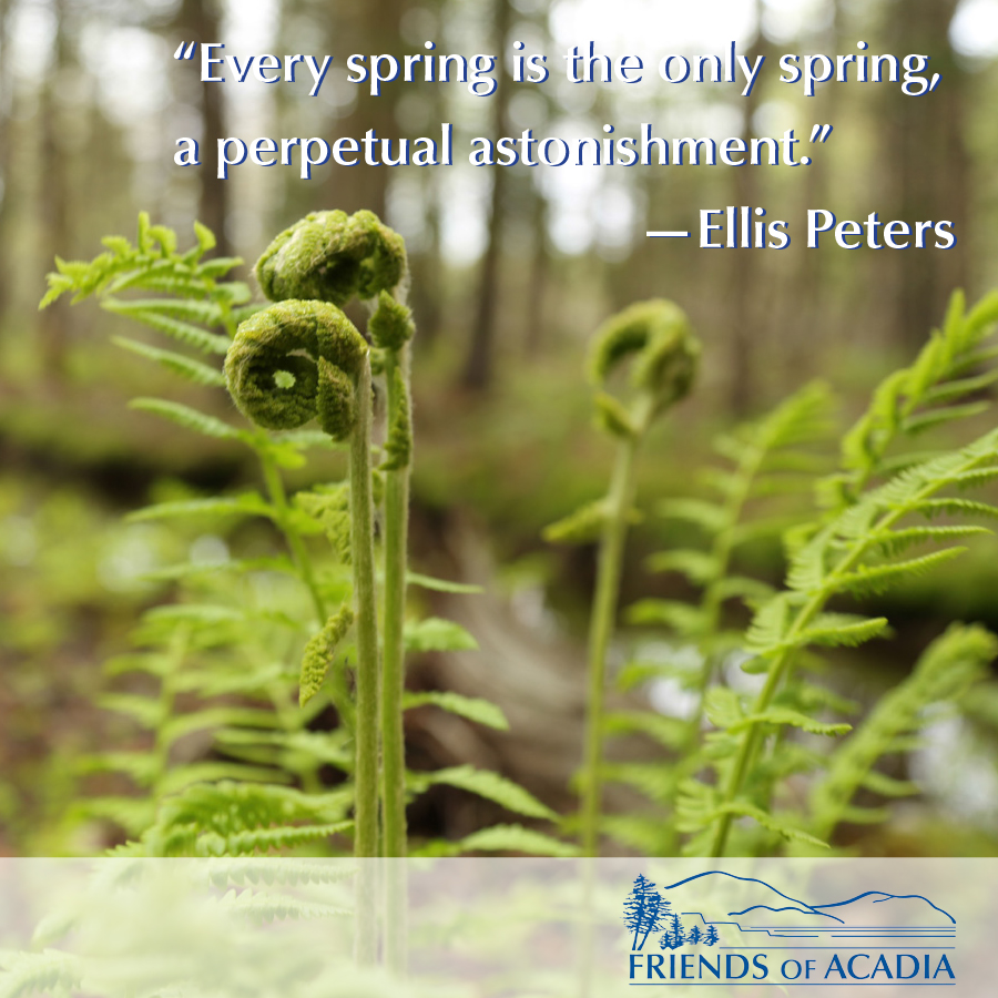 """Every spring is the only spring, a perpetual astonishment"" --Ellis Peters"