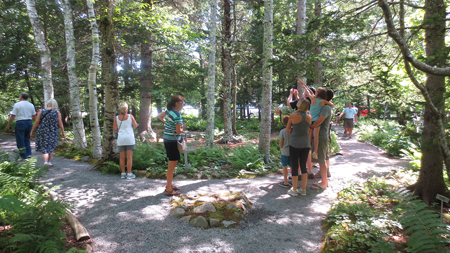 Beautiful Visitor Information For The Wild Gardens Of Acadia »