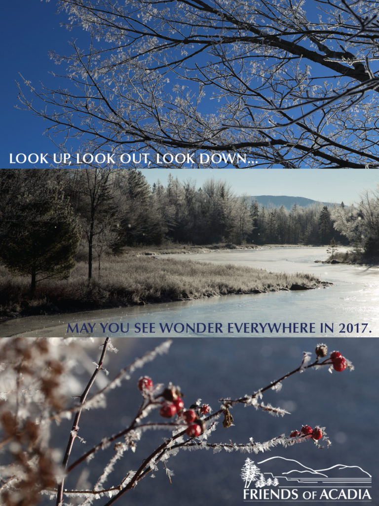 Look up, look out, look down...may you see wonder everywhere in 2017.